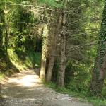 Trekking Cammino del Volto Santo