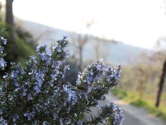 Via del Volto Santo - Trekking  Lunigiana Lucca