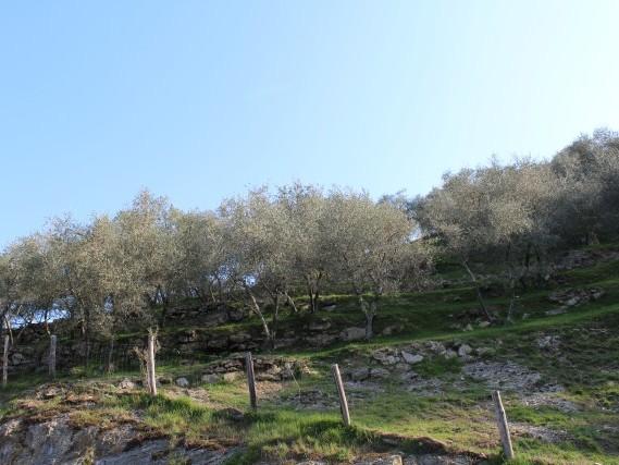 Via del Volto Santo - Trekking Via Francigena