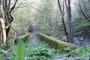 Via del Volto Santo  percorsi a piedi in Toscana