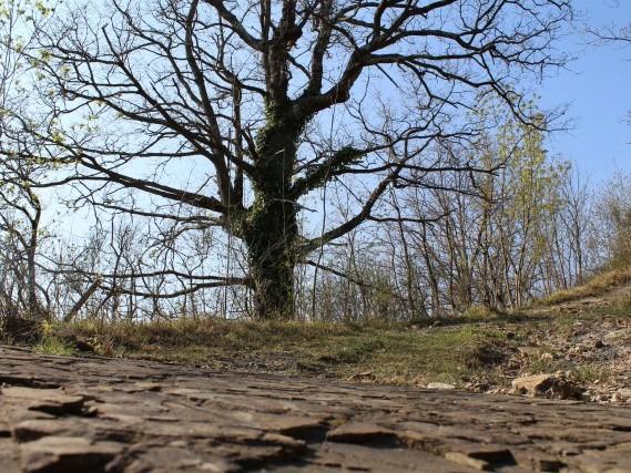 Via del Volto Santo  percorsi a piedi lunigiana