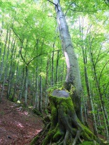 Vacanze Toscana trekking appennino 6