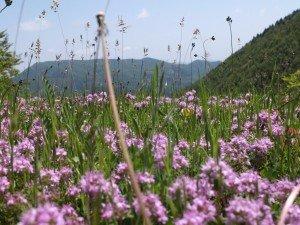 Vacanze Toscana trekking appennino 4