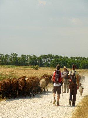 viaggiare a piedi trekking hiking