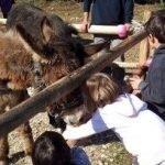 Asineria Toscana laboratorio per bambini