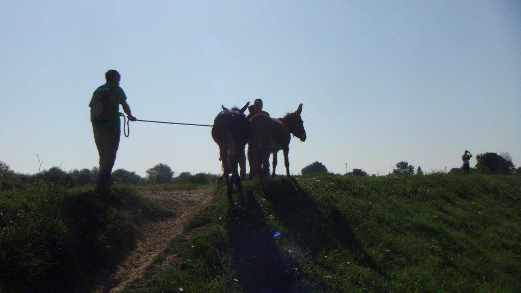 itinerario escursione trekking piedi pisa bambini asini