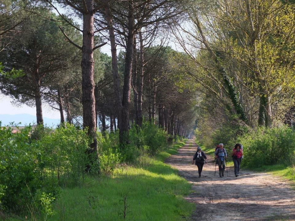 itinerario trekking toscana-pisa-livorno via navicelli