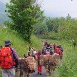 Escursione trekking Pisa con asinelli