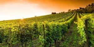 itinerari vino toscana degustazioni vino