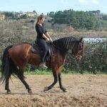 escursioni-cavallo pisa 3