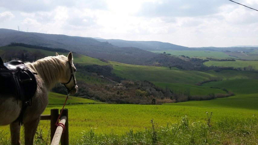escursioni cavallo pisa 8
