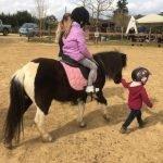 escursioni cavallo pisa pony