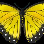 Storie per bambini: La farfalla ed il mare