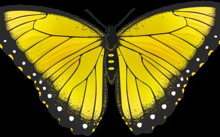 favole per bambini storie farfalla fiaba